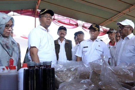 Pemprov NTB dorong produksi pakan ternak tembus pasar ekspor
