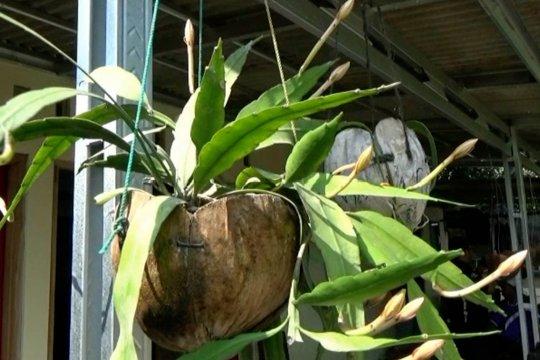 Pot tanaman dari sabut kelapa yang ramah lingkungan