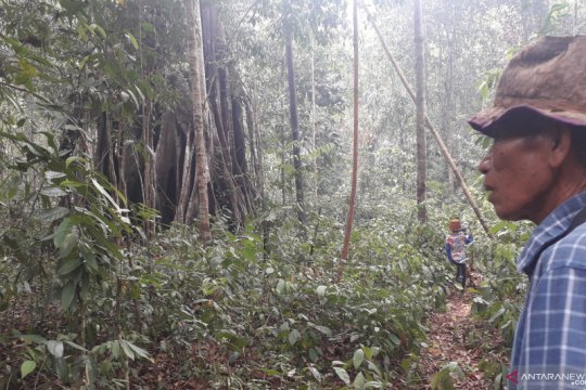 Merawat hutan di Bangka Barat melalui budi daya madu