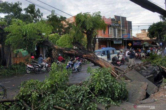 Pohon tumbang timpa pengguna jalan disebut Walhi kelalaian pemerintah