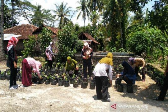DPRD Kulon Progo minta dinas pertanian dampingi kelompok wanita tani