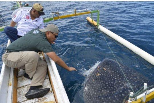 Gubernur Gorontalo ajak Kodiklat TNI AD wisata hiu paus