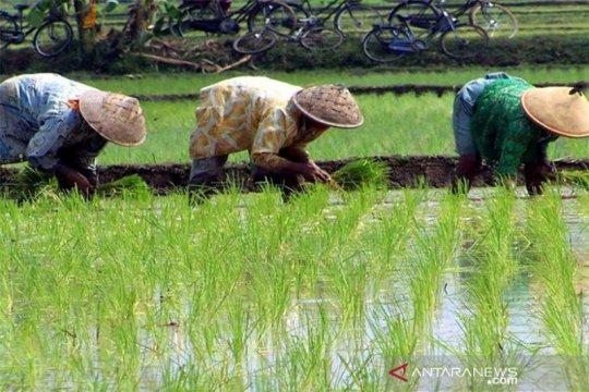 FAO: Integrasi data pertanian fondasi menuju ketahanan pangan