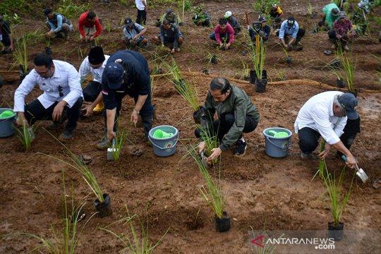 Tiba di Sukajaya, Presiden Jokowi tanam bibit vetiver cegah longsor