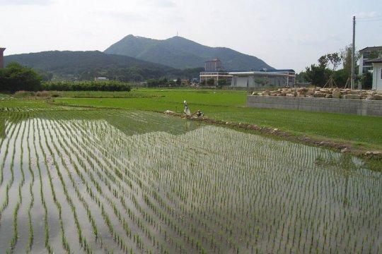 Peneliti: Kembangkan metode Kerangka Sampel Area benahi sektor pangan