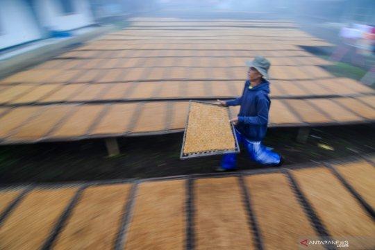 Pemerintah perlu maksimalkan potensi lapangan kerja industri tembakau