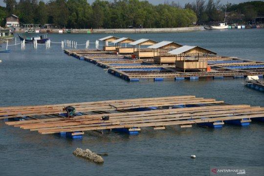 KKP berkomitmen bangun sistem logistik perbenihan kelautan perikanan
