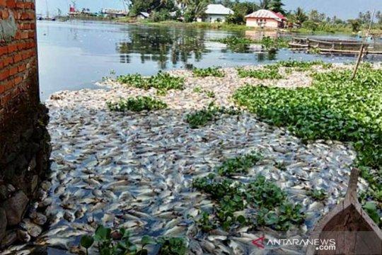 Berat total ikan yang mati di kawasan Danau Maninjau sampai 63 ton