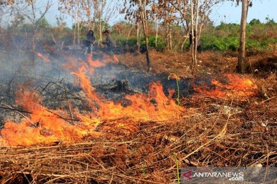 Berpotensi karhutla, BMKG deteksi 24 titik panas di wilayah Aceh