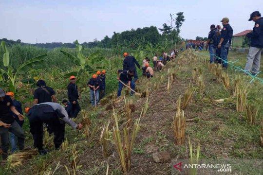 58.280 rumput vetiver ditanam di tanggul rawan longsor Indramayu