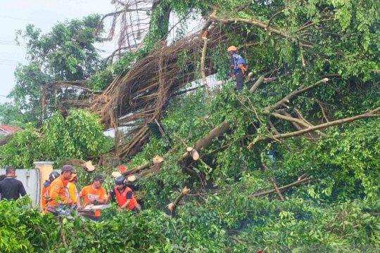 Angin kencang masih melanda di sejumlah kecamatan di Jember