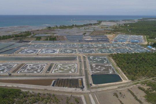 KKP targetkan peningkatan ekspor udang hingga 250 persen pada 2024