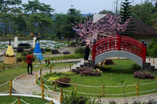 Wisata Taman Celosia Page 1 Small