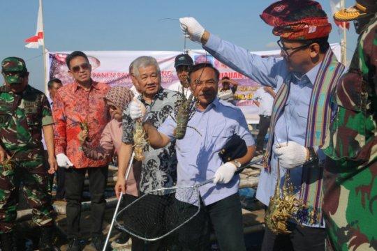KKP siapkan strategi dorong industri budi daya lobster nasional