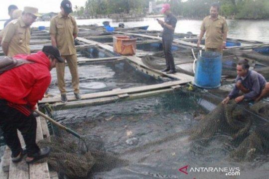 Gubernur targetkan BBI Belitung produksi 600.000 bibit kerapu