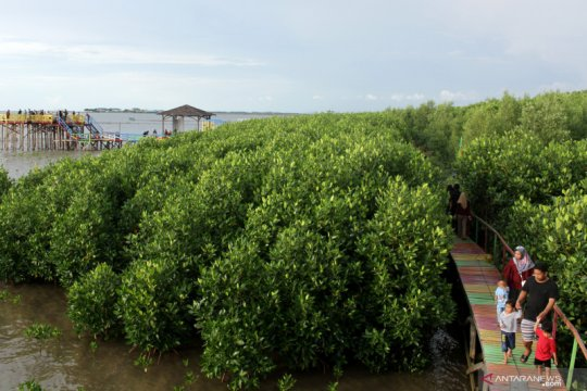 KKP targetkan rehabilitasi 200 hektare lahan mangrove pada 2020