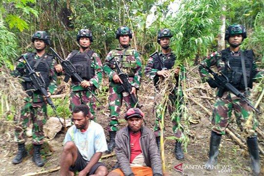 Ladang ganja kembali ditemukan di Distrik Waris, perbatasan RI-PNG