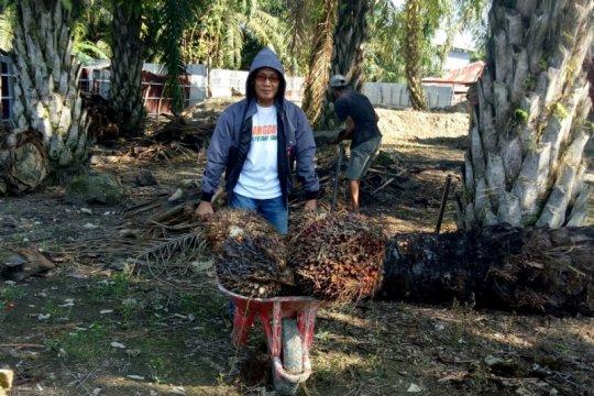 Sulsel segera bangun pabrik pengolahan kelapa sawit di Luwu Utara