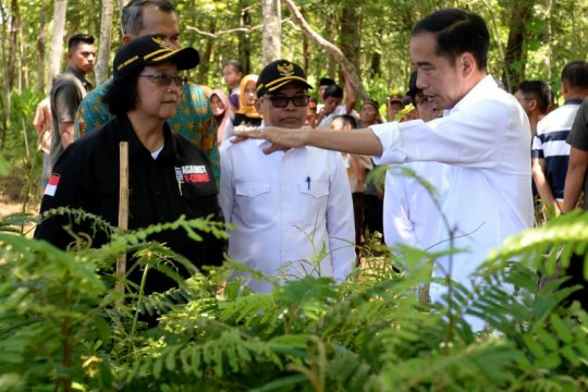 KLHK tindaklanjuti arahan Presiden lakukan rehabilitasi lahan