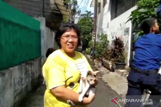 Petugas Damkar evakuasi kucing kampung terjebak di gudang
