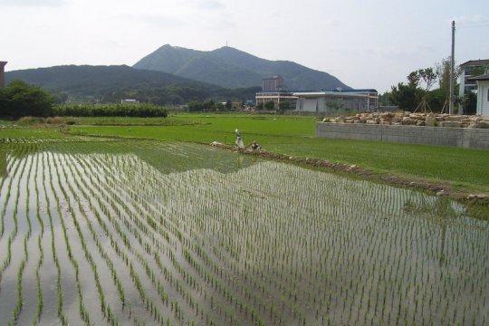 Legislator: Swasembada pangan terwujud dengan atasi alih fungsi lahan
