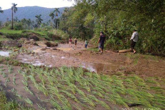 10 haktare sawah tertimbun material banjir di Talamau Pasaman Barat