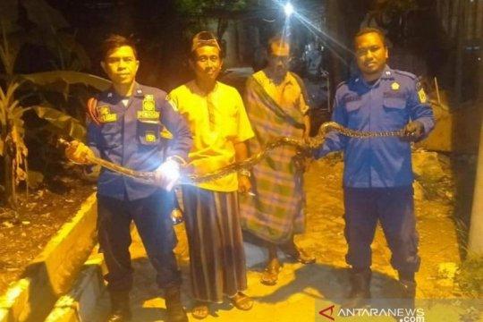 Sudin Damkar evakuasi ular sanca di Pulau Lancang