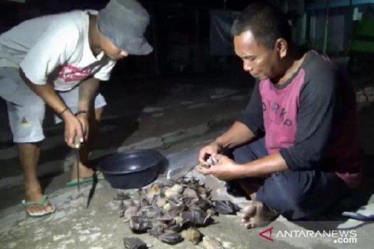 "Pemburu ""codot"" di Ngawi-Jatim tak khawatirkan wabah virus COVID-19"