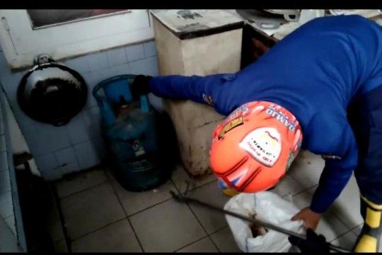 Damkar evakuasi kobra bersarang di kolong tabung gas dapur warga