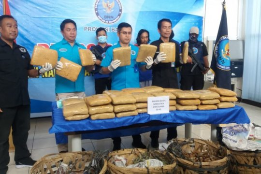 BNN Banten amankan empat tersangka pengiriman 50 kilogram ganja