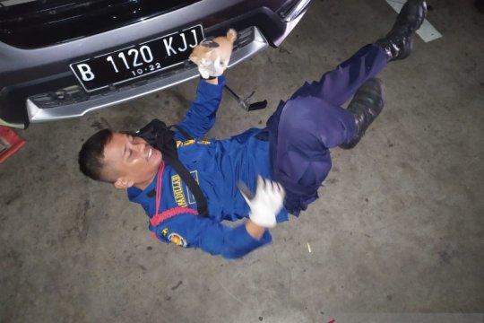 Petugas Damkar selamatkan anak kucing terjebak dalam mobil