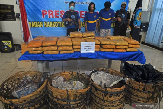 BNN Banten gagalkan peredaran 50 kg ganja jaringan lapas