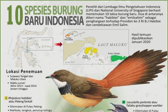 10 Spesies burung baru Indonesia