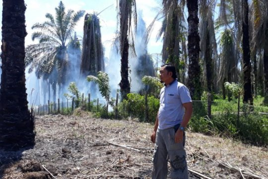 Lima hektare lahan kelapa sawit warga Agam terbakar