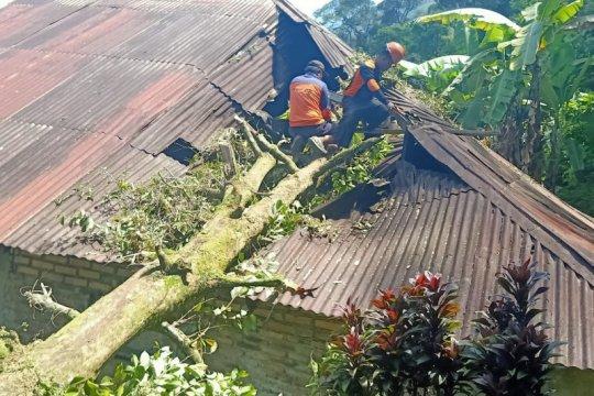 Angin kencang,  25 bangunan di Agam rusak tertimpa pohon