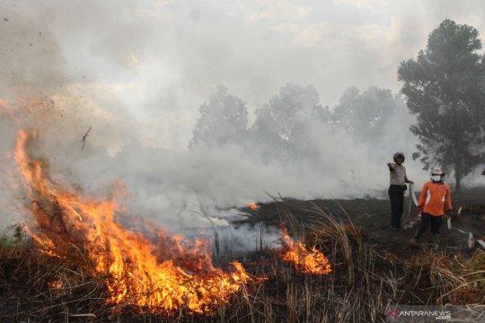 Jumlah tersangka karhutla Riau bertambah jadi 21 orang