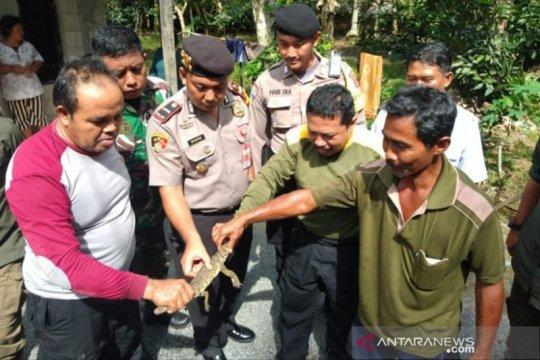BKSDA Kalteng perkirakan Desa Mentaren terdapat habitat buaya