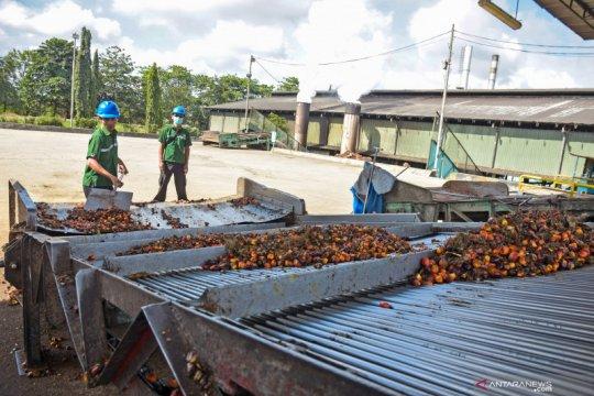 Harga sawit Riau turun akibat merebaknya virus corana
