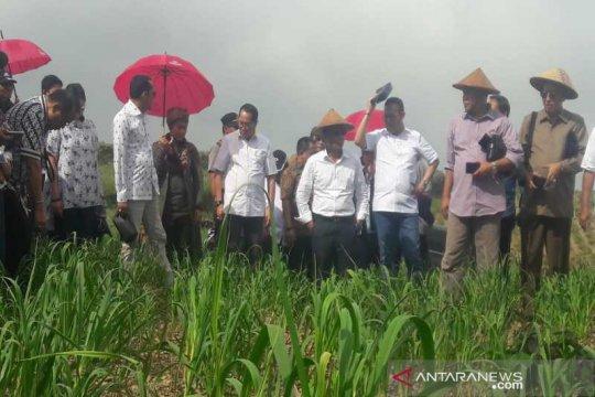 Komisi IV DPR dorong pemerintah setop impor bawang putih