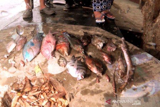 KKP kaji fenomena kematian ikan massal di Maluku Utara