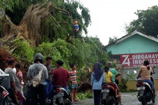 Belasan rumah tertimpa pohon akibat puting beliung