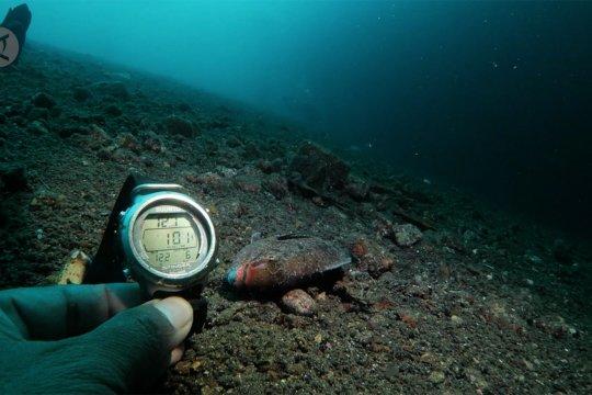 Polisi usut kematian ikan mendadak di perairan Maluku Utara