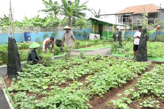 Konsep pertanian perkotaan di Jakarta tumbuhkan masa depan hijau