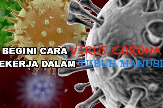 Begini cara virus corona bekerja dalam tubuh manusia