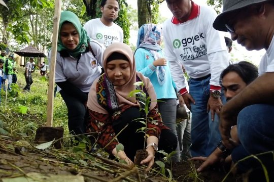 Aksi tanam seribu pohon sukseskan program NTB hijau