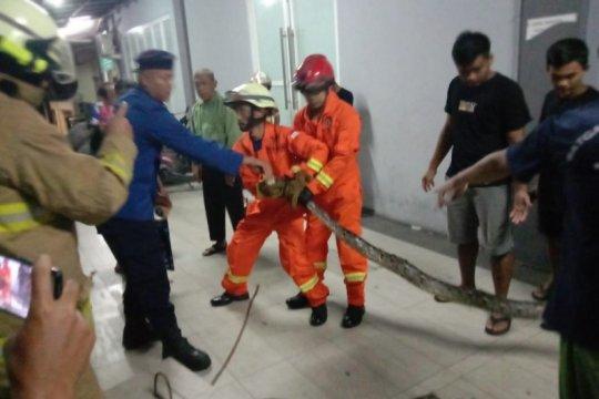 Ular sanca empat meter dievakuasi Damkar Jakarta Timur dari saluran