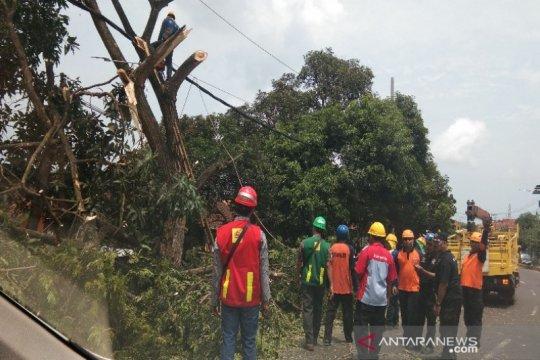Gubernur Babel: Jangan marah PLN tebang pohon di jaringan listrik