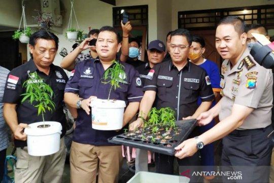 Polda Jatim menggerebek rumah penanaman ganja di Surabaya
