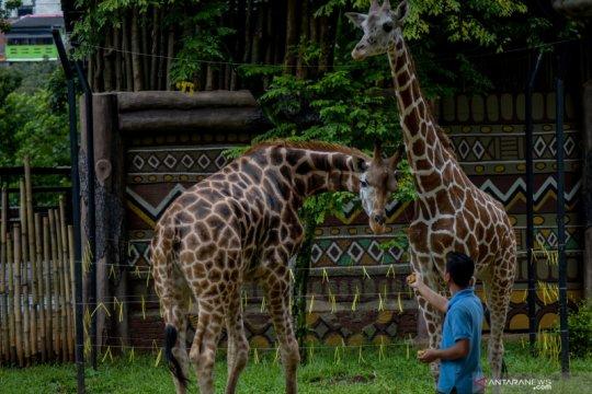 Kebun Binatang Bandung terima bantuan ayam beku dari Ketua MPR