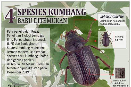 Spesies kumbang baru